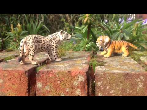 Snow Leopard Vs Lion