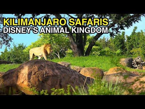 [4K] Kilimanjaro Safaris - African Animals : Animal Kingdom (Orlando, FL)
