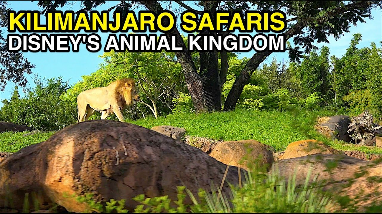 Image of: Disneys Animal 4k Kilimanjaro Safaris African Animals Animal Kingdom orlando Fl Youtube 4k Kilimanjaro Safaris African Animals Animal Kingdom orlando