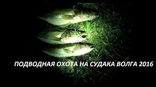 ПОДВОДНАЯ ОХОТА 2016 МНОГО СУДАКА ВОЛГА Spearfishing pike perch, Volga 2016(На судака охотились на Волге, вода местами мутняк, что мешало нашим планам поймать трофей. Приятного Всем..., 2016-10-06T10:07:29.000Z)
