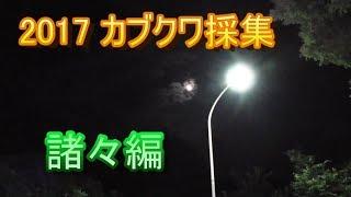 長野県、埼玉県でのカブクワ採集の模様です。 結局ミヤマは捕れなかった...
