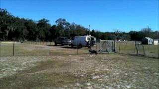 Rocket J. Squirrel: Herding Lesson No. 3