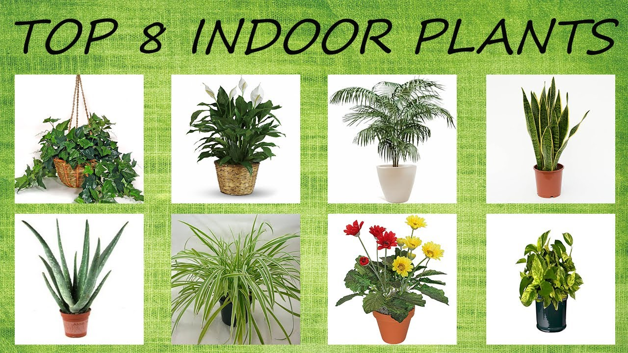 Top 8 Indoor Plants For Air Purification