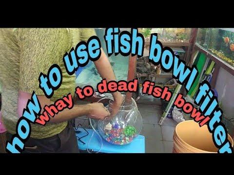 Fish Bowl How To Fit Fish Bowl Filter Air Pump फिश बाउल में क्यों मछली मर जाती है क्या हम उसमे फिल्ट
