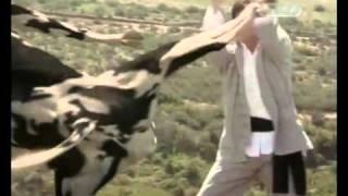 Kungfu bò sữa