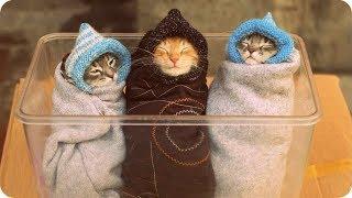 Забавные и смешные котята   Подборка самых милых котят