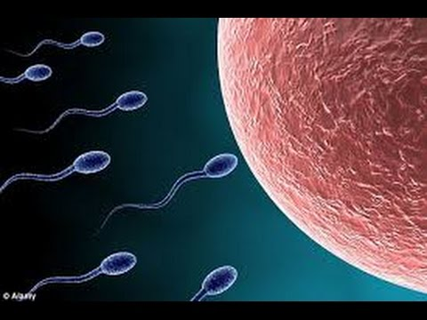Important normal sperm count motility