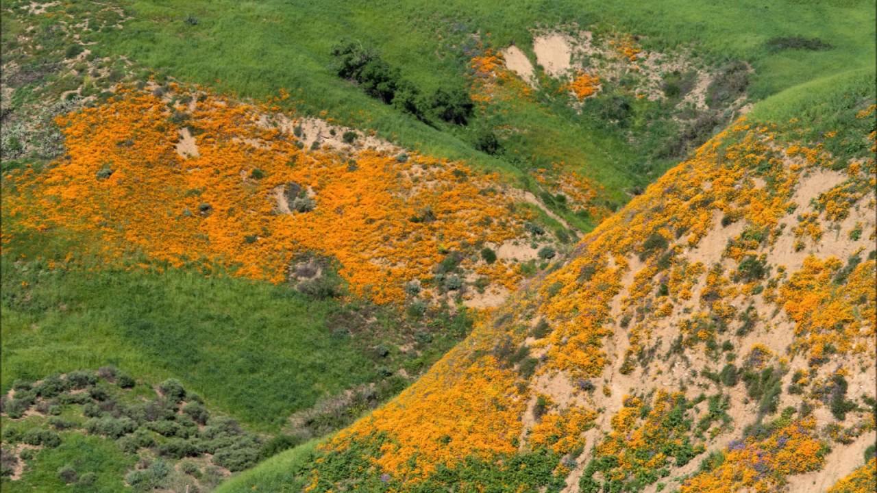 spring 2017 anza borrego u0026 covina hills wildflowers w music by