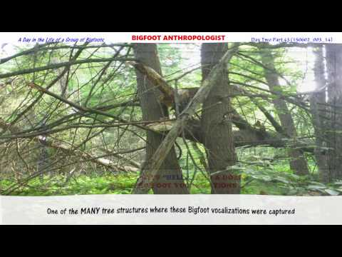 """Bigfoot Says """"HELLO!"""" and a Dozen Other Bigfoot Vocalizations:   Day Two Part 43  of A Day in the..."""