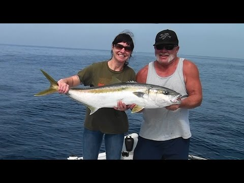 Yellowtail on the slow troll The Reel Brother Presents