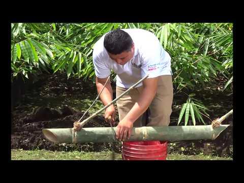 Reproducción del bambú