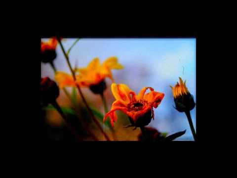 Чёрный Лукич - Завял Цветок
