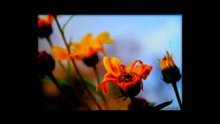 �������� ���� Чёрный Лукич - Завял Цветок ������