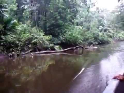 The amazon river in Ecuador