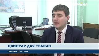 У Києві заборонять ховати тварин на стихійних цвинтарях