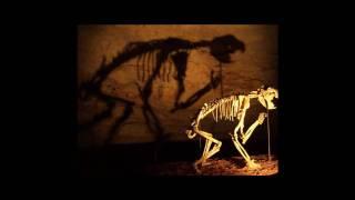 Prehistoric Cats & cats like creaturs.wmv