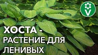 Секреты выращивания ХОСТЫ  в саду!