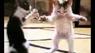 رقص قط