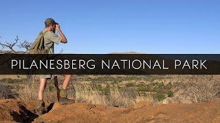 Pilanesberg National Park - South Africa
