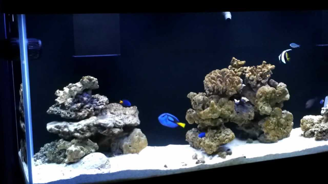 160g fowlr tank new fish ick high youtube