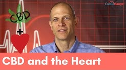 CBD and the Heart. What the Research Says and Potential Uses.