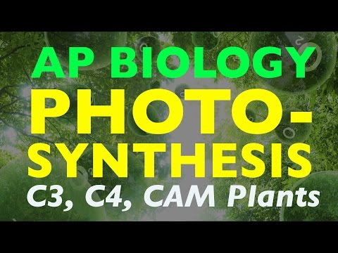 AP Biology: Photosynthesis (C3, C4, CAM Plants)