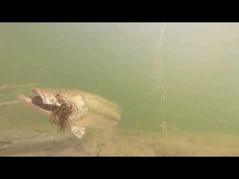 Underwater Bass Fremont Quarry Lakes