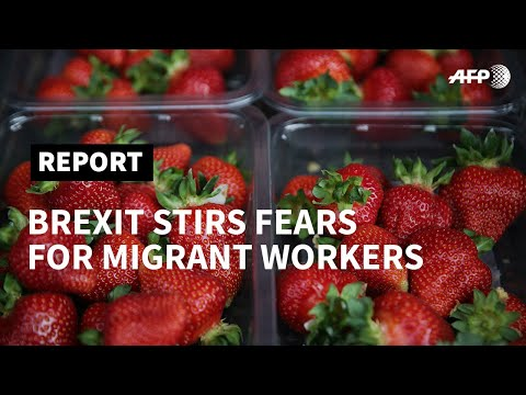 From Bulgaria to Kent, Brexit stirs fears for migrant workers    AFP