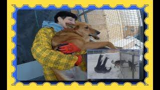 Спасение животных от гибели продолжается/Rescue animals from death continues