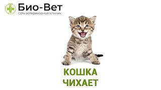 Кошка чихает. Ветеринарная клиника Био-Вет.