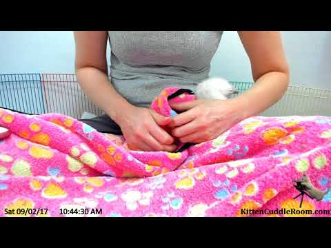 How to cuddle kittens! Foster mom Sarah visits the adorable rescued kittens!  9/2