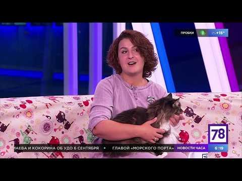"""Советы по воспитанию кошки в """"Полезном утре"""""""