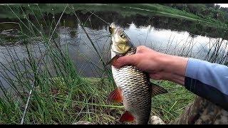 Рыбалка на голавля. Приманки на голавля. Раз на раз не приходится