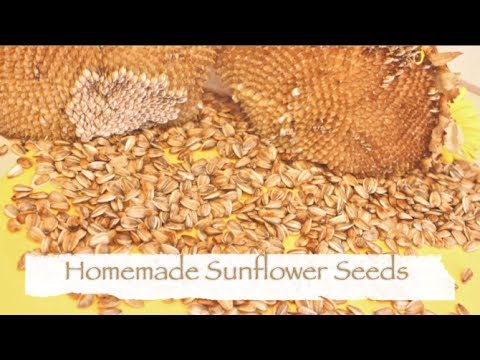 How To Make Sunflower Seeds!