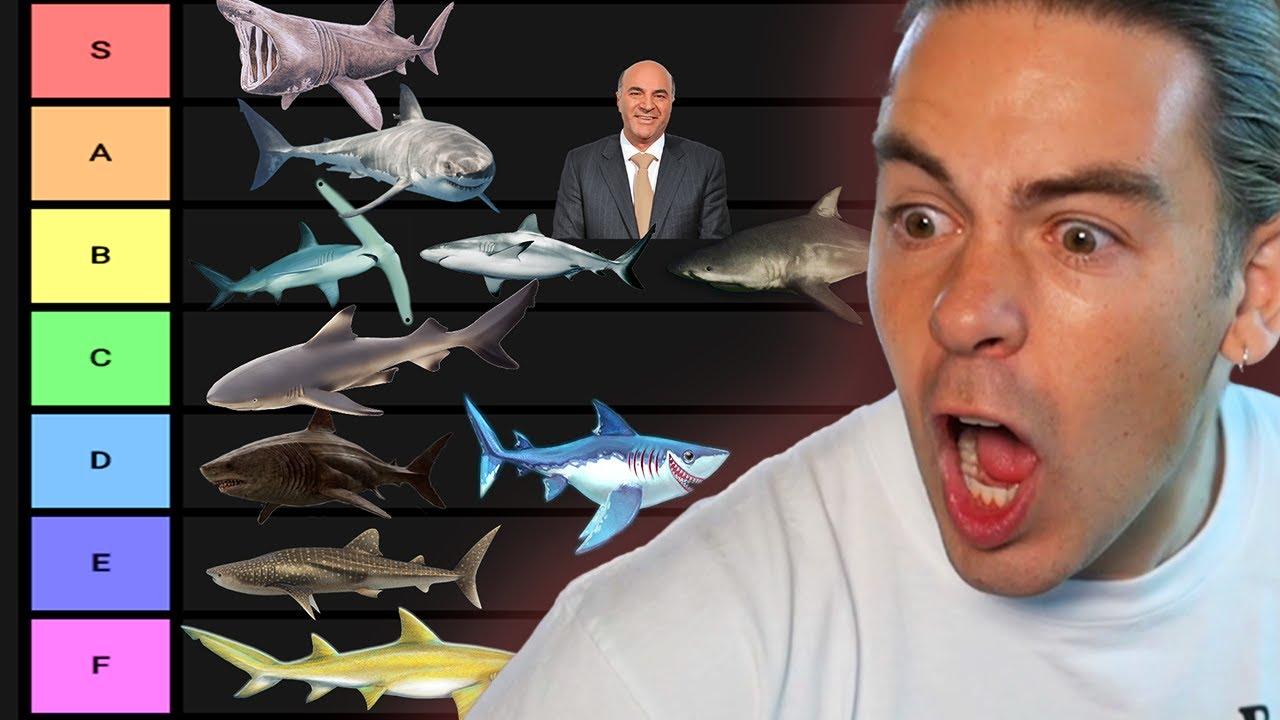 Shark Tier List