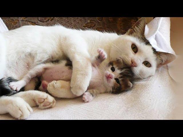 「猫かわいい」 すごくかわいい子猫 - 最も面白い猫の映画 129