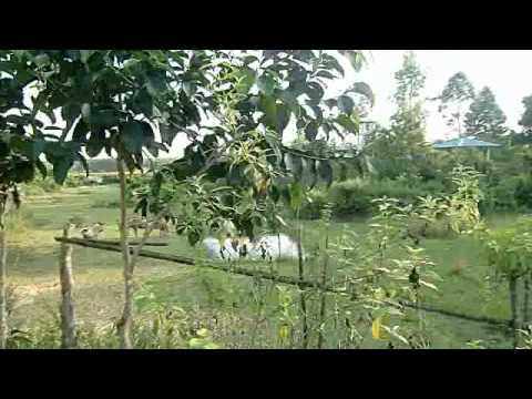 Bangladesh chittagong Dulhazra safari park bangladesh tourism travel guide
