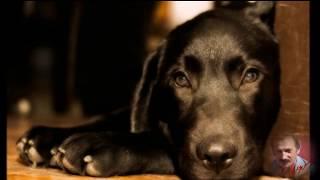 собака тяпа Т  С  Никитины