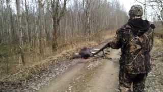 Загонная охота на лося в Беларуси