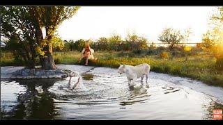 НЕВЕРОЯТНО !!! Львица заходит в воду и спасает человека ! Тайган .Крым.