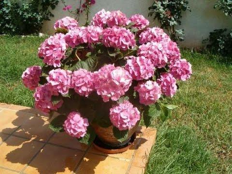c mo cuidar las plantas de exterior dr matta tvagro