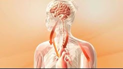 Stress - Wirkung im Körper