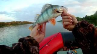 Риболовля на Обі. Хороші щуки. Трофей. Н.Про. 21.07.17-23.07.17 р.