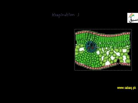 Gaseous Exchange in Plants | Biology Chap 10 | 10th Class | Punjab Board HD