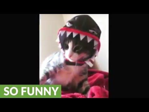 Festive kitten shows off Halloween costume