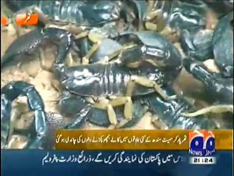 Black Scorpion more Expensive than Gold in Tharparkar