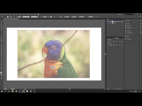 Parrot Icon / Logo – Illustrator Speedart