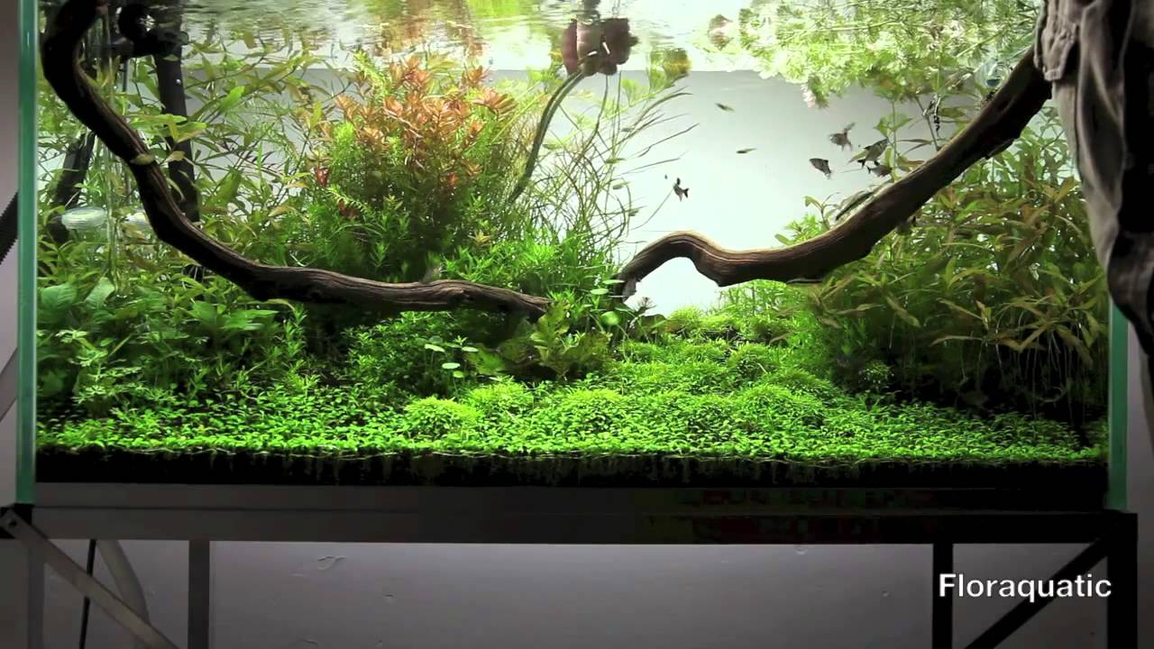 Entretien d 39 un aquarium plant aquarium care aquascape for Entretien aquarium