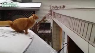 Кошка занимается паркуром.