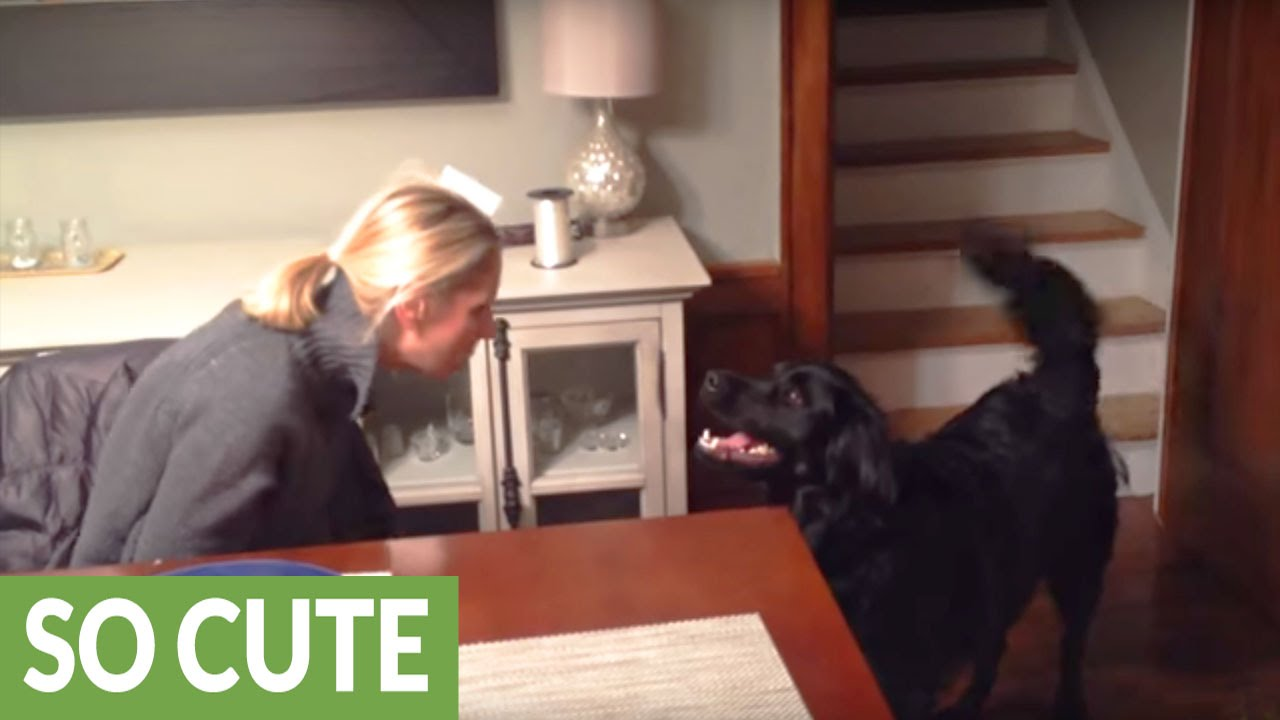 Dog hilariously confused by owner's new hat